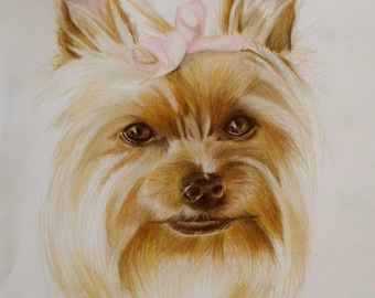 Custom Pet Portraits, Yorkie, Yorkshire, Terrier, Colored Pencil, Drawing, Illustration, Custom Dog