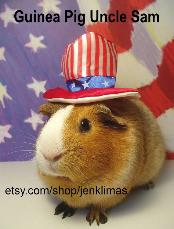 """GUINEA PIG Fourth Of July Uncle Sam Portrait - Limited Edition 8x10"""" Photograph"""