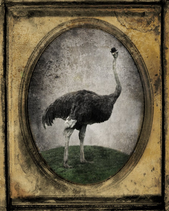 Ostrich Print Animal Photography Animal Portrait Bird Art Photo Trending Item Canadian Seller Print - Sir Chandler