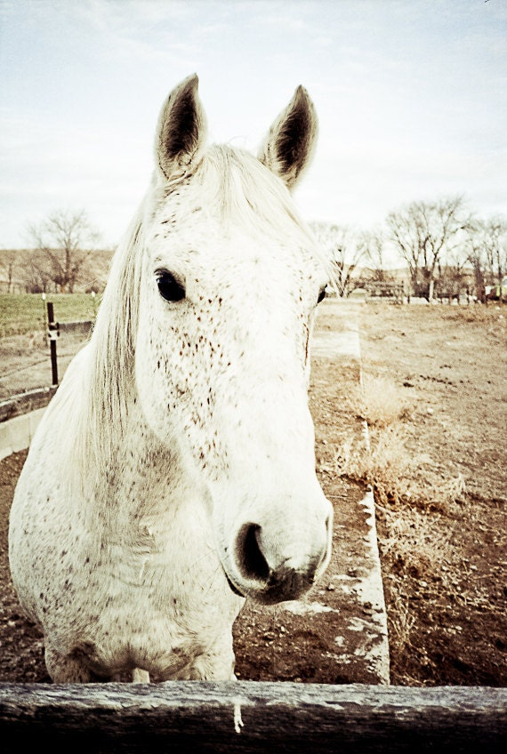 Equestrian horse Photography teenager whisperer ride rider pony kentucky derby for her spotted - My friend Flicka - fine art photograph