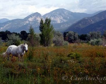 White Horse Landscape Photography -Taos New Mexico horse poetry - I began to see with mine own eyes - giclee 8x12