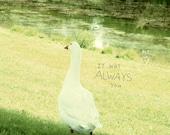 Always You // Landscape Nature Photo, Art Print Poster, Romantic Cottage, Love Nest, Retro Cabin, Shabby Chic Decor, Goose, Bird, Photo