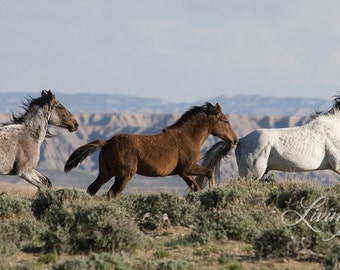 Three Run - Fine Art Wild Horse Photograph - Wild Horse - Adobe Town