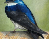 Bird Art - Portrait of a Swallow - Color Pencil Drawing PRINT ACEO size 2.5 by 3.5 Artist Trading Card