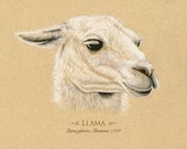 Llama Art Print  Giclee  Can be personalized   8 x 10 inches