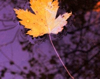Fall Leaf Stream Floating Autumn Creek Golden Maple Leaf Rustic Cabin Lodge Photograph