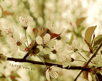Love You So // Nature Photo, Valentines Gift, Wedding Gift, Anniversary Gift, Romantic Photo, Shabby Chic Decor, Typography, Love