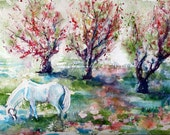 Oversized White Horse Watercolour Art - Sugar - in the Apple Orchard Meadow - watercolor giclee 16x20 - Equine Fine Art