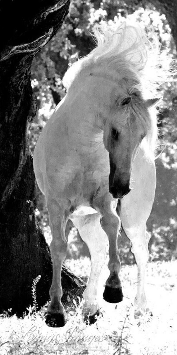 Stallion Dances - Fine Art Horse Photography - Horse - Black and White -  Lusitano - Fine Art Print
