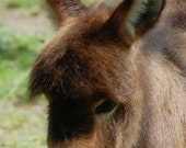 Animal Photography DONKEY Handcrafted Photo Greeting Card