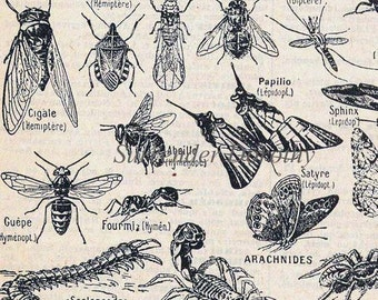 Insects Crustaceans French Dictionary Paris France Natural History Chart Of Bugs To Frame