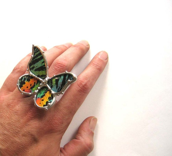 Sunset Moth Ring - Adjustable Size. real butterfly
