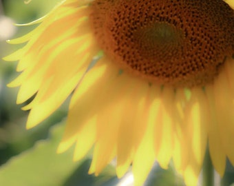 Dreamy Sunflower Fine Art Photography 11x14 Photo Print Home Decor Wall Art