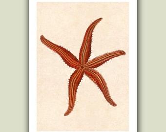 Sea star Print 5, Ocean starfish Print,  Nautical  Art Print, Matte Print 5x7