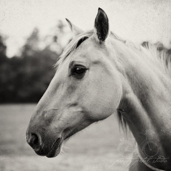 images of horses in black and white - photo #46
