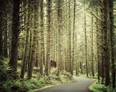 Landscape Photography, Pine Trees in Forest, Tree Art, Oregon Landscape, Nature Photography, Home Decor, Tree Photo - Making Inroads