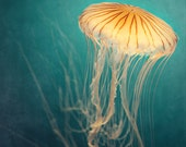 "Jellyfish Print, Nature Photography, Large Wall Art, Teal Wall Art, Beach Decor, Ocean Wall Decor, Fine Art Photography Print ""Medusa"""