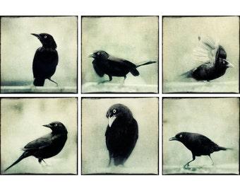Black and White Print Set, Halloween Decor, Raven Photos, Crow Art, Spooky Photographs, Crow Photography, Fine Art Print Set