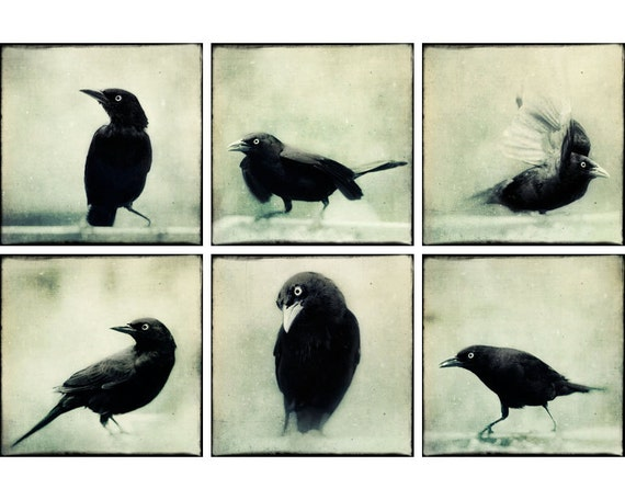 Black and White Print Set, Halloween Decor, Raven Photos, Crow Art, Spooky Photographs, Crow Photography, Fine Art Print Set