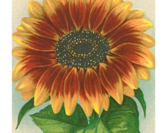 Art Print on Silk from a Vintage Seed Packet - SUNFLOWER SEEDS applique fiber arts free s/h in US