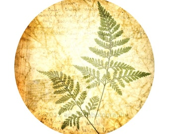 Nature Photography Fern Photo Rustic Decor Botanical Print Nature Decor Brown and Green Circular Image on an 8x10 inch Photograph Ferns
