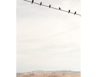 Landscape Photo - Desert Line - Fine Art Photograph - Birds on a Line Print - Desert Photo - Nature Photo - Birds on a Wire Photo - Wall Art