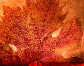 Hearth Perfume Oil -  Autumn Fall Perfume Oil - Vanilla Caramel Sugar Butter Rum Chestnuts