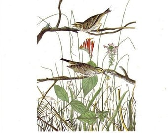 Audubon Savannah Sparrow (Savannah Finch) or Rufous Sided Towhee (Towee Bunting) for Framing, Collage, Altered Art & Paper Arts PSS 1634