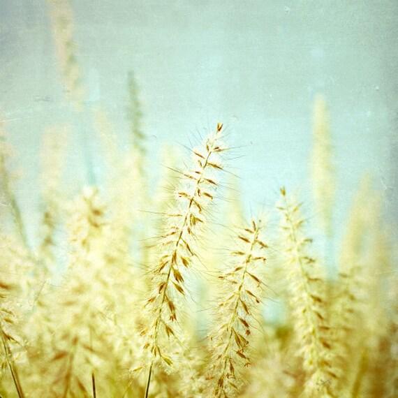 Botanical photography print pale golden yellow aqua grass wall art - Sway