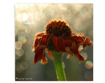 Wilted Orange Flower Photograph Home Photography Prints Nature Photography Nature Lover Woodland Scene Flower Botany Print