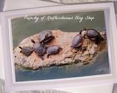 Painted Turtles on a Rock in Krug Park