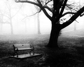 High Park - 8x10 paper, traditional black and white photograph, tree photograph, toronto print, toronto black and white photography