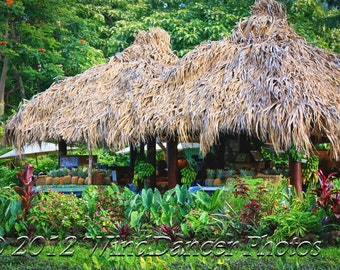 Roadside Stand - Road to Hana - Maui - Hawaii - Hawaii Photo - Tropical - Home Decor - Hawaii Souvenir - Hawaii Gift