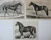Group of 3 Antique 1880's Famous Victorian Horses Illustrations, Prints, Black and White, Engravings