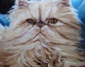 "Persian Cat,  custom Pet Portrait Painting in Oils, 10x10"""