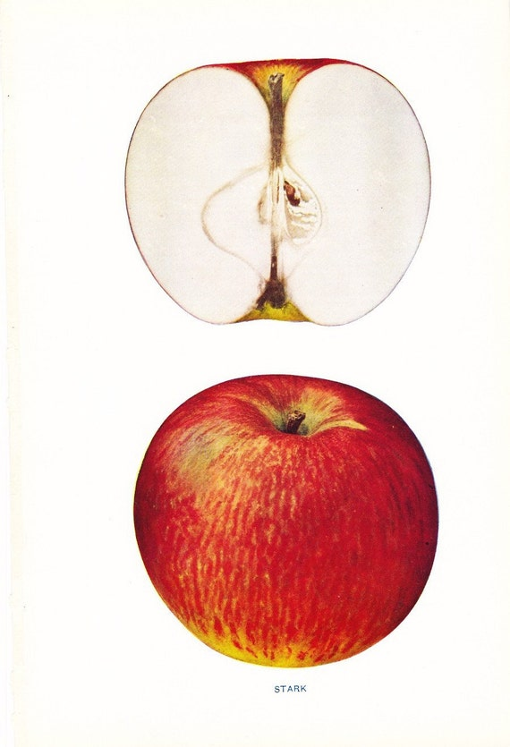 1905 Fruit Print - Stark Apple - Vintage Home Kitchen Food Decor Plate Plant Art Illustration Great for Framing 100 Years Old