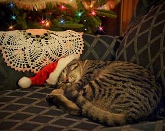 50 Greeting Cards Sleeping Santa Daisy Kitty Cat Kitten Art Photo Christmas Holiday Cards w/ Envelopes