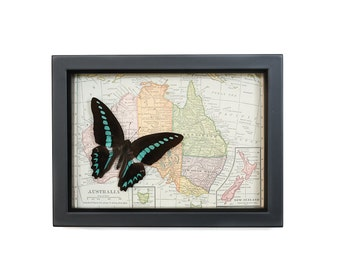 Map of Australia vintage with real framed butterfly