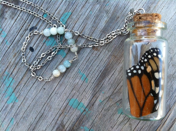 natural history. monarch. wing. vial. necklace.