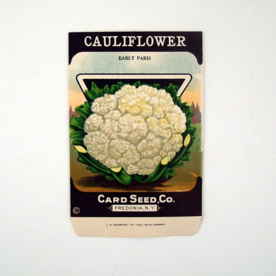 Paper Seed Packet Vintage 1920s Unused Paper Seed Packet Cauliflower