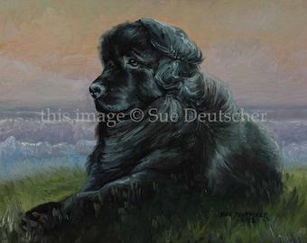 Newfoundland Dog - 11x14 print