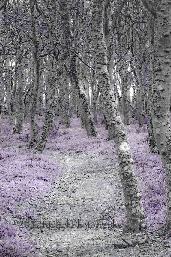 photograph of whimsical wonderland full of birch and lavender