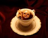 Travesty in a Teacup - Homo cephalos