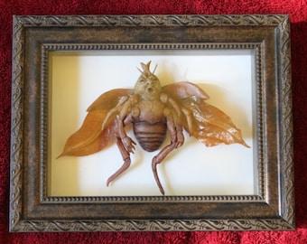 Coléoptère Diablotin  (Beetle Imp)
