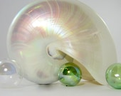 """Beach Decor Nautilus Shell - XXL Nautical Decor White Pearl Nautilus Seashell, 7-7.5"""""""
