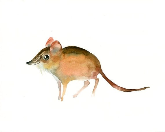 ELEPHANT SHREW by DIMDI Original watercolor painting 10X8inch