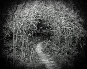 Haunted Forest Photo - Gothic Fairytale Forest Print - Spooky Halloween Decor - Black and White Photography - Landscape Photo