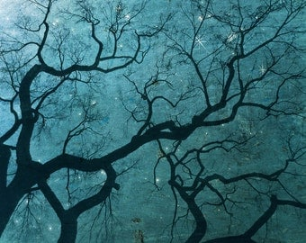 Starry Sky Photo - Ethereal Night Sky - Stars Bare Tree - Forest Branches Photograph Print - Surreal Nighttime Dusk Art