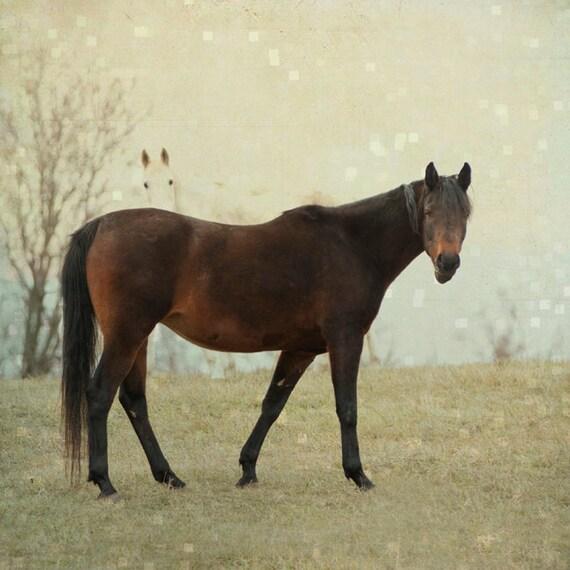 Items similar to Horse Photo Dreamy Home Decor Bay Horse