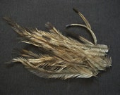 12 Brown Emu Feathers